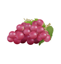 red grape realistic grapes bunch isolated farm vector image