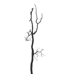 Dead branches vector image