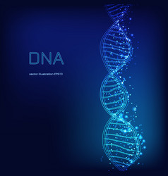 dna molecule on blue background vector image