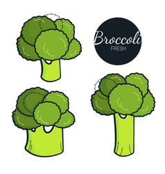 fresh organic broccoli isolated on white vector image