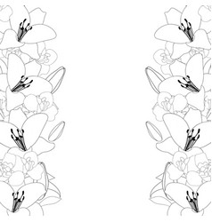 lily and iris flower outline border on white vector image