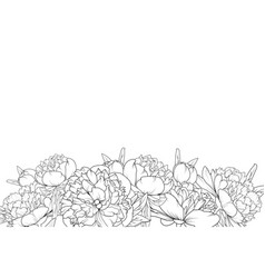 peony flowers black white bottom border frame vector image