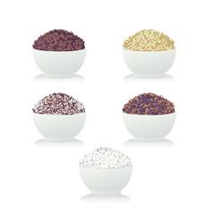 Rice2 vector