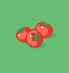 three tomatoes vector image