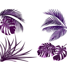 Ultra purple leaves of tropical palm trees set vector