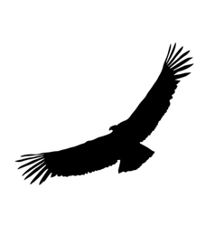 Black silhouette of condor vector