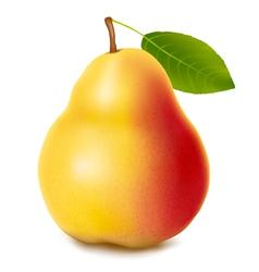 fresh ripe pear vector image vector image