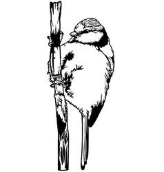 Bluetit Bird vector
