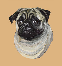 pug colorful hand drawing portrait vector image