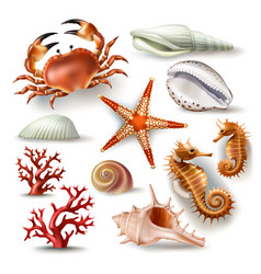 Set of seashells coral crab vector