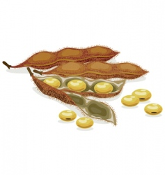 soybean realistic vector illustration vector image vector image
