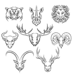 Wild animals hand drawn heads vector image vector image