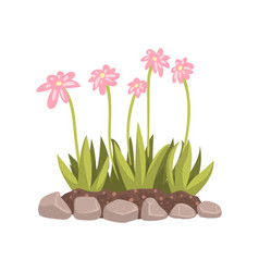 Flowers growing in the flowerbed cartoon vector