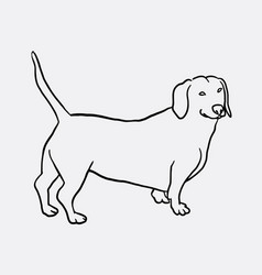 teckel dog hand drawing vector image