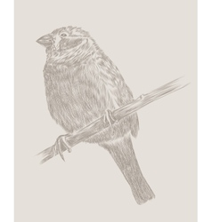 Hand drawing bird sketch vector image