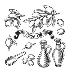 Hand Drawn decorative olive set vector