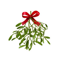 Mistletoe hanging fluffy vector