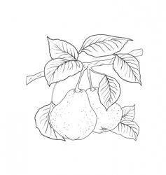 pear tree vector image vector image