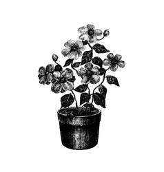 Black and white drawing of flower vector image