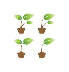 elegant sprout on a pot agriculture logo design vector image