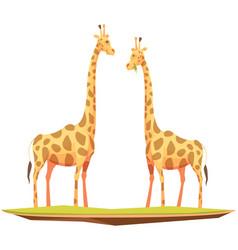 giraffes couple animals composition vector image