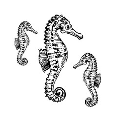 Sea horse hand drown sketch vector