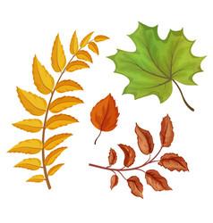 sketch autumn leaves set vector image
