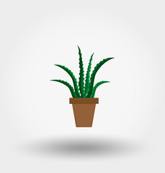 succulent plant in a flowerpot houseplant vector image