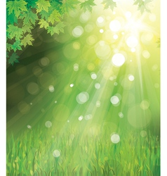 Green leaves on sunny background vector