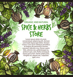 Sketch spices and herbs farm store poster vector
