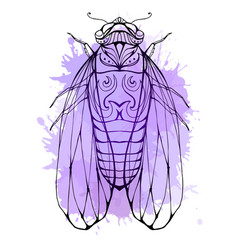 cicada with boho pattern and watercolor splashes vector image