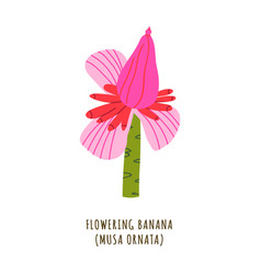 flowering banana tropical flower vector image