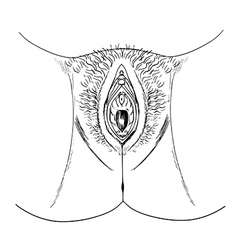 Human female genitalia outline external vector image