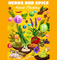 vitamins in organic spices and herb seasonings vector image