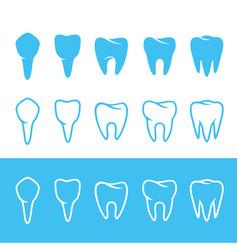 human dentition teeth vector image