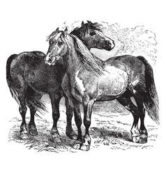 Horses vintage vector