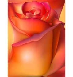Orange rose macro EPS 10 vector image