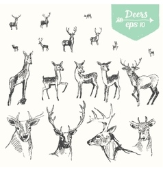 Set hand drawn deers vintage sketch vector image