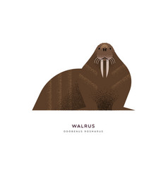 wild walrus seal isolated animal cartoon vector image