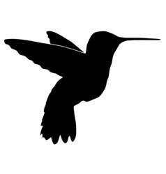 black silhouette of hummingbird vector image vector image
