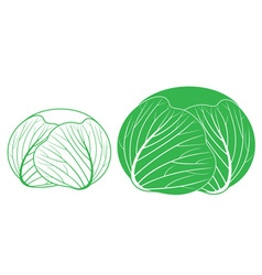 Cabbage Outline Silhouette vector image