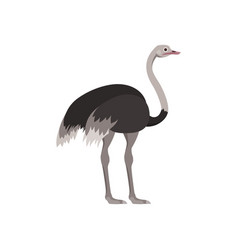 cartoon ostrich bird with long neck vector image