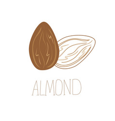 Delicious almond nuts hand drawn icon vector