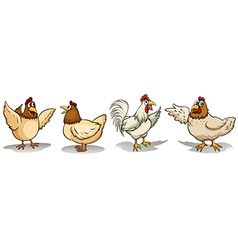 Hens and rooster vector