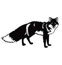 Standing fox black and white image vector