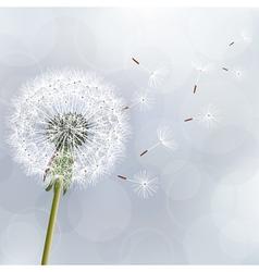 Floral trendy background with flower dandelion vector image vector image