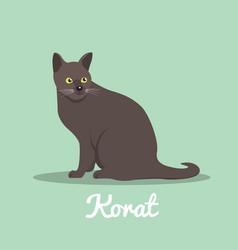 Korat cute cat with green eyes design vector