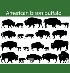 American bison buffalo silhouettes vector