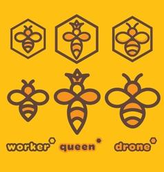 bee specimens vector image