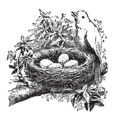 bird and nest vintage vector image